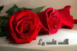 trandafiri_rosii_2